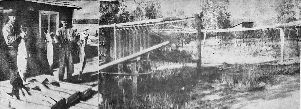 En tidig morgon 1948 i fiskeläget i Storöhamn. På bilden syns bröderna Johan och Emil Granath från Pålänge med nyfångad lax.